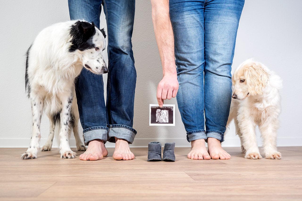 Familien und Babybauchfotos in Dresden mit Hund